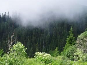 borjomi kharaguli national park - georgia 2