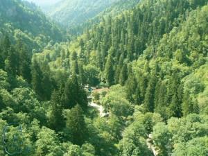medical tours in Borjomi (5)