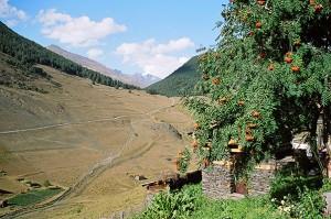 Tusheti-Province
